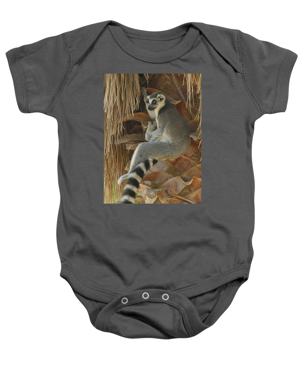Ringtail Baby Onesie featuring the photograph Ring Tail by Diane Greco-Lesser