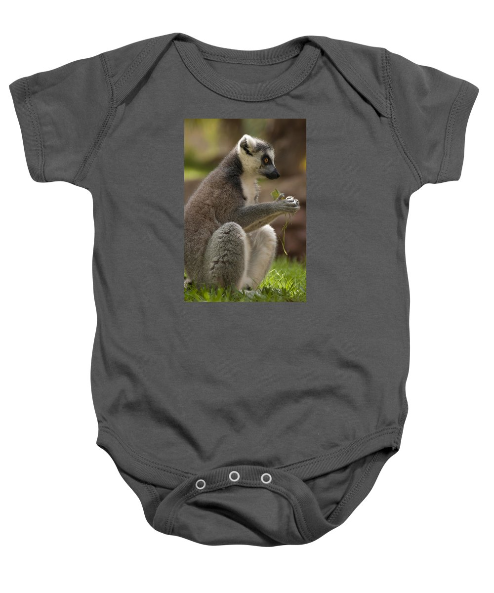Adult Baby Onesie featuring the photograph Ring-tailed Lemur Holding A Clump Of Grass by Jill Mitchell