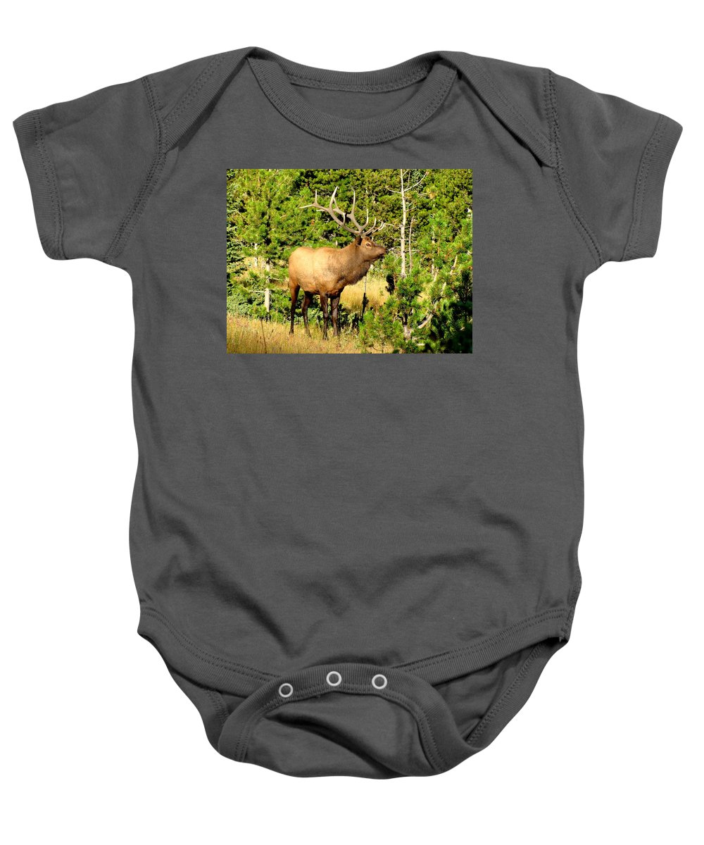 Elk Baby Onesie featuring the photograph Rocky Mountain Elk by Marilyn Smith