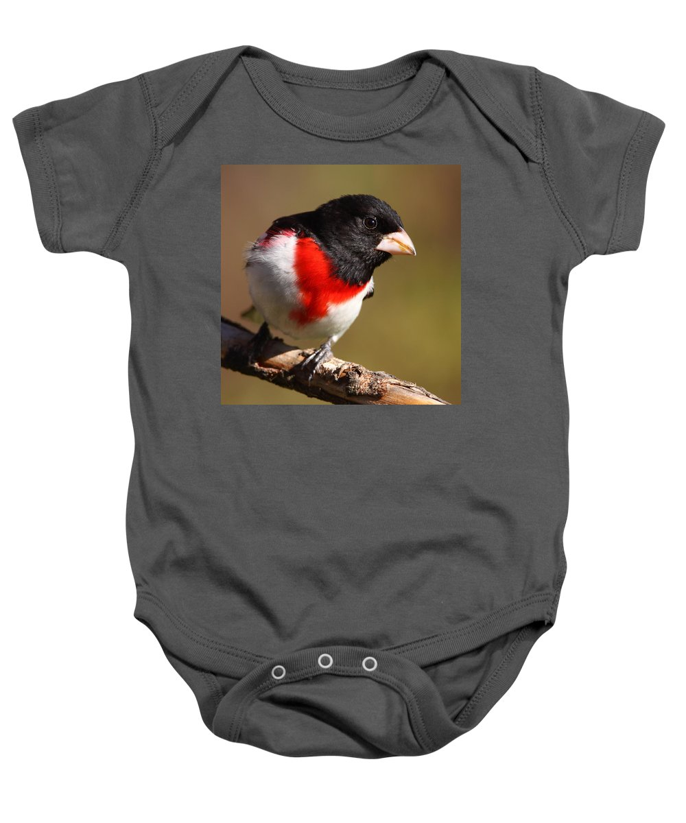 Rose-breasted Grosbeak Baby Onesie featuring the photograph Rose-breasted Grosbeak Squared by Bruce J Robinson