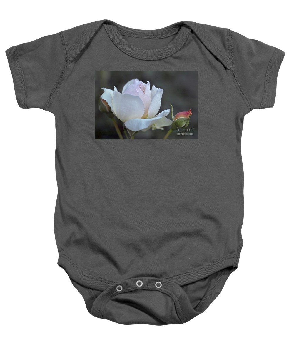 Rose Baby Onesie featuring the photograph Rose Flower Series 14 by Heiko Koehrer-Wagner