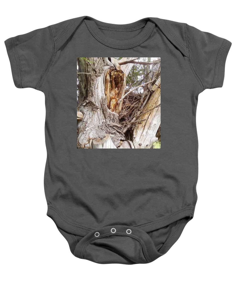 Tree Limbs Bark Baby Onesie featuring the photograph Rough Tree by Cindy New