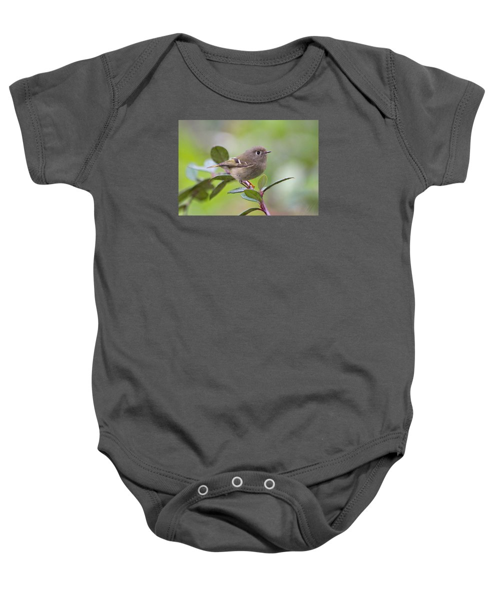 Bird Baby Onesie featuring the photograph Ruby Crowned Kinglet by Jan McCamey Hill