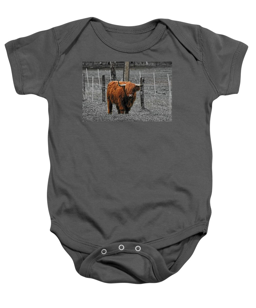 Cattle Baby Onesie featuring the photograph Scottish Highlander by Douglas Barnard