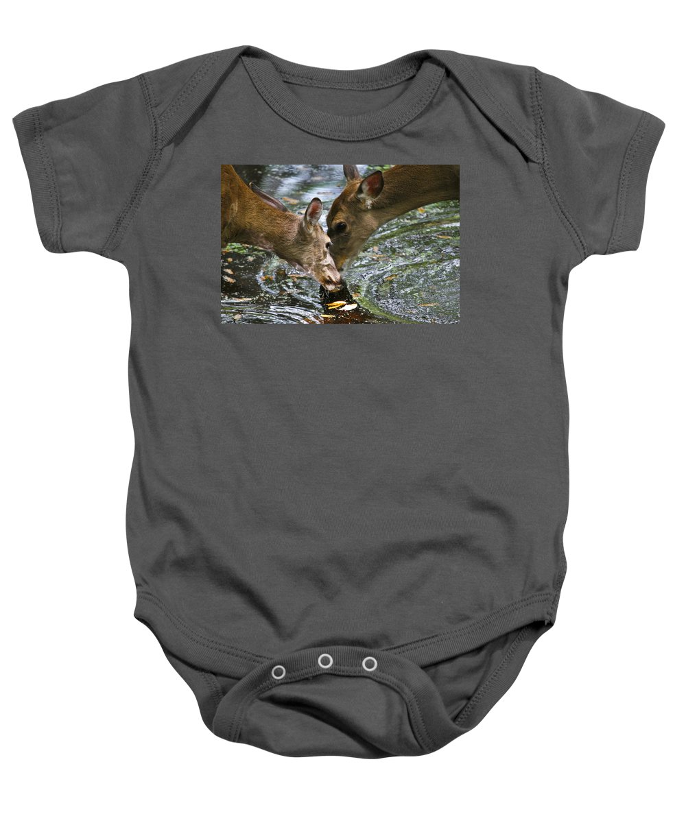 Animals Baby Onesie featuring the photograph Sharing by Taylor Howe