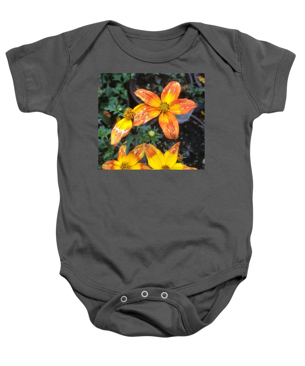 Bidens Ferulifolia Baby Onesie featuring the photograph Simple Star by Dennis Burton