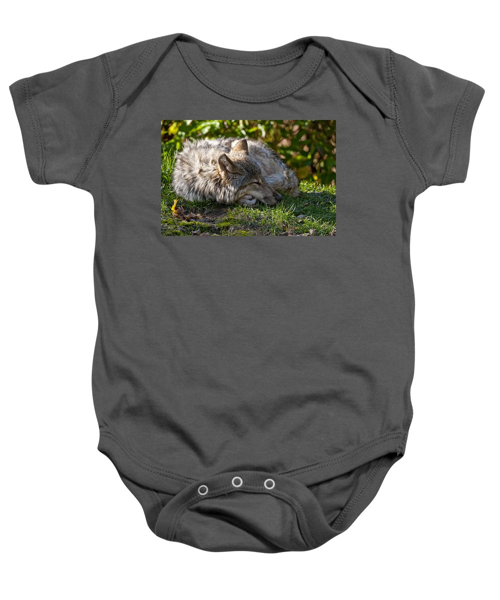 Michael Cummings Baby Onesie featuring the photograph Sleeping Timber Wolf by Michael Cummings