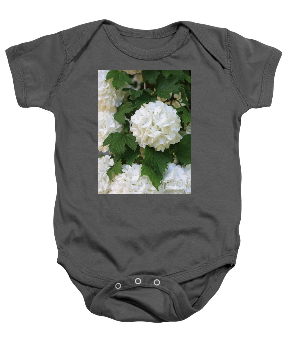 Snowball Tree Baby Onesie featuring the photograph Snowball Tree With Delicate Leaves by Carol Groenen
