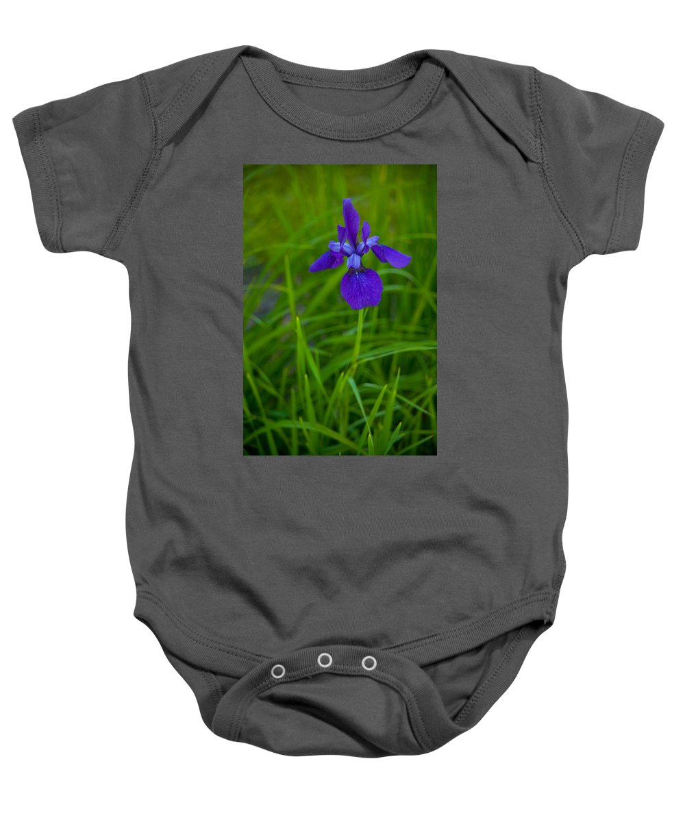 Blue Flag Baby Onesie featuring the photograph Solitary Blue Flag by Irwin Barrett