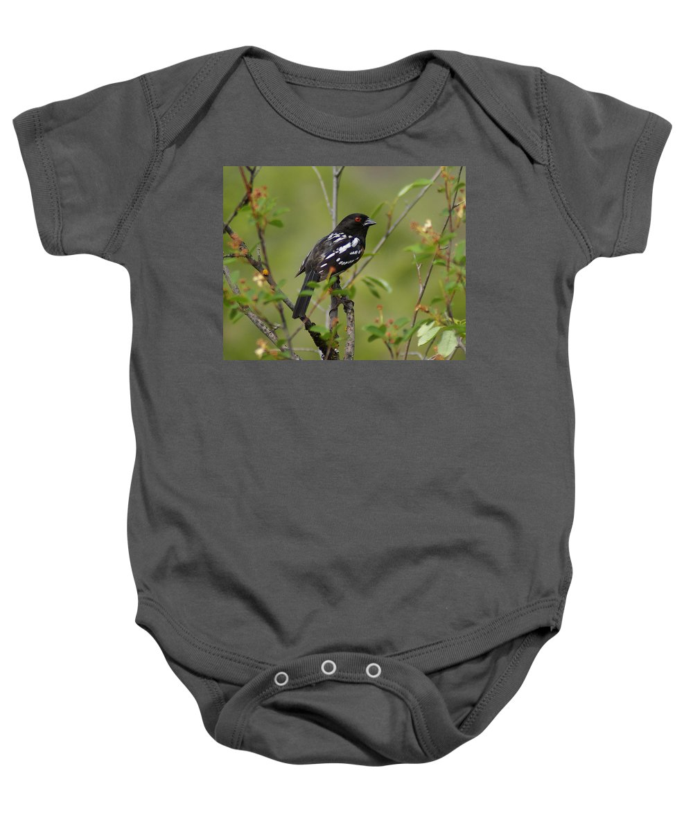 Spokane Baby Onesie featuring the photograph Spotted Towhee by Ben Upham III
