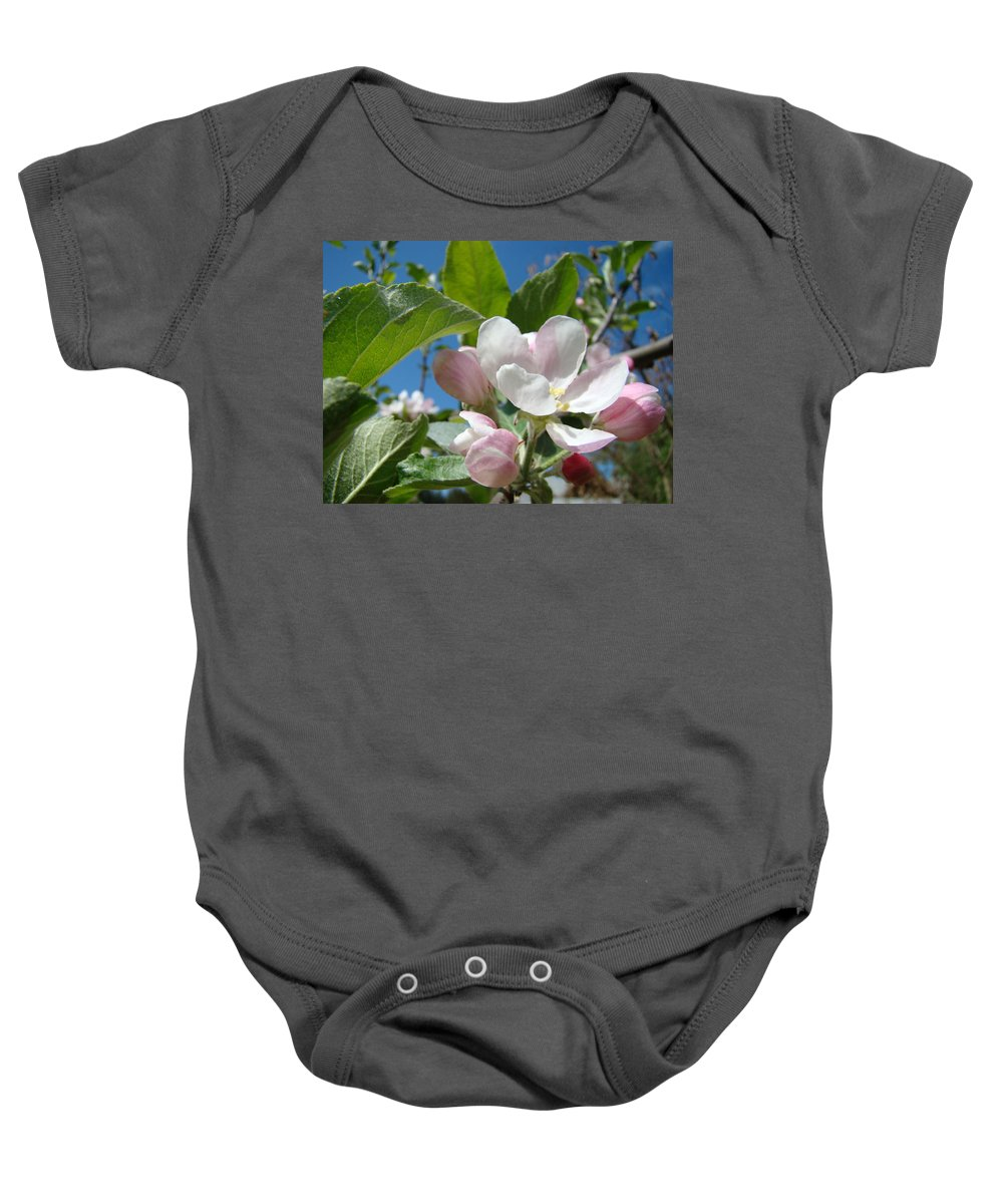 Apple Baby Onesie featuring the photograph Spring Apple Blossoms Pink White Apple Trees Baslee Troutman by Baslee Troutman