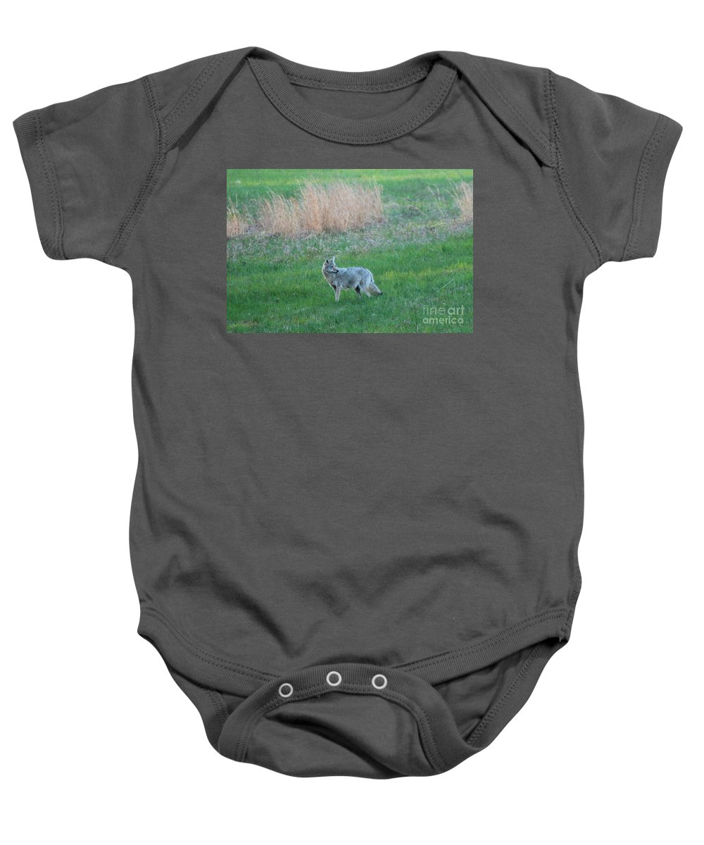 Coyote Baby Onesie featuring the photograph Spring Coyote by Neal Eslinger