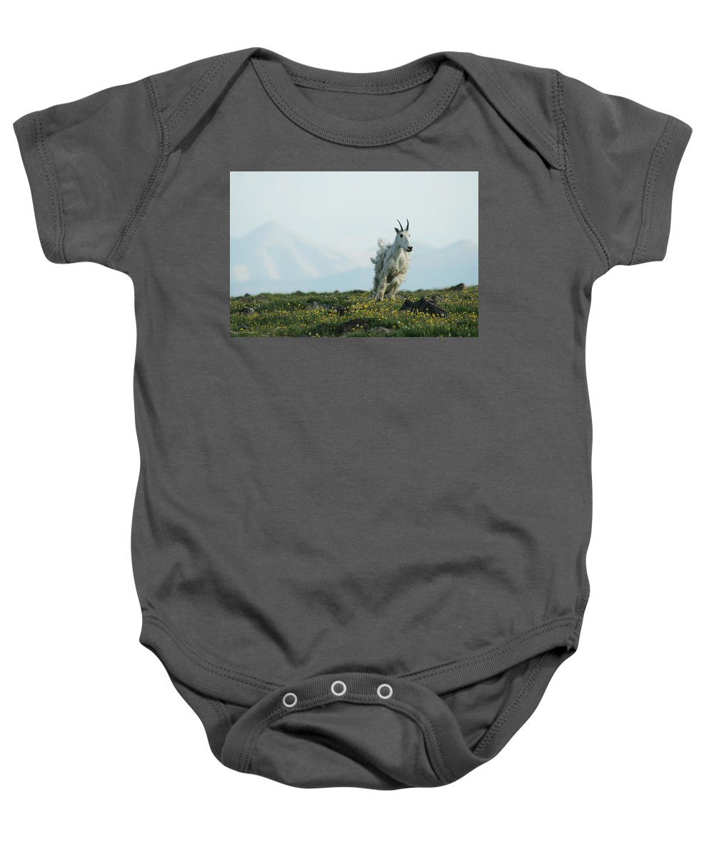 Mountain Goat Wildlife Nature West Montana Baby Onesie featuring the photograph Spring Layers by Brandon and Becky Holley