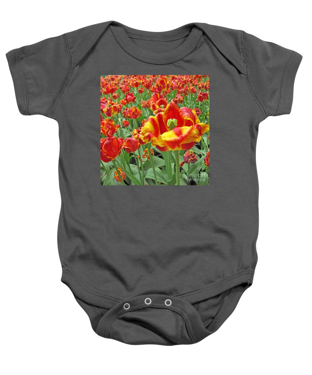 Tulips Baby Onesie featuring the photograph Square Yellow And Red Tulips by Adri Turner