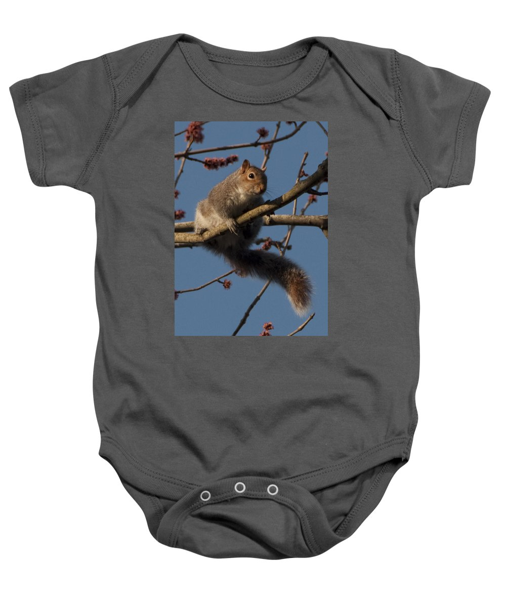 Squirrel Baby Onesie featuring the photograph Squirrel by Steven Natanson