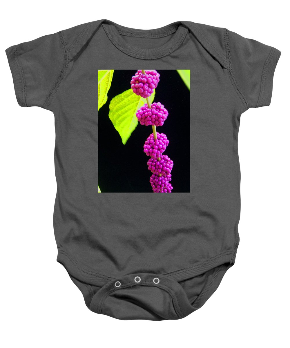 Flower Baby Onesie featuring the photograph Stalk Of Seeds by Laurie Paci