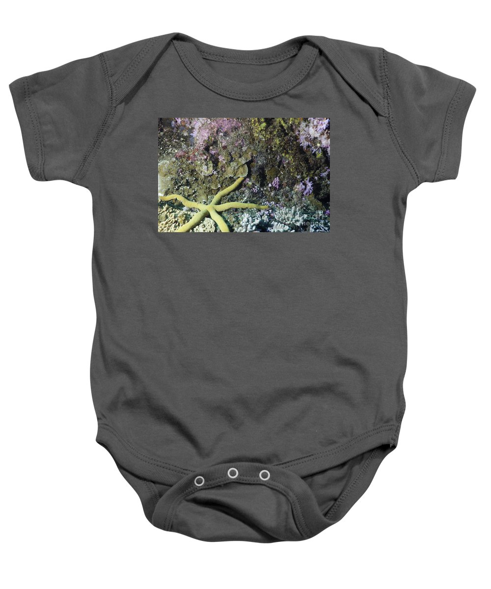 Tropical Fish Baby Onesie featuring the photograph Starfish On A Coral Reef by Anthony Totah