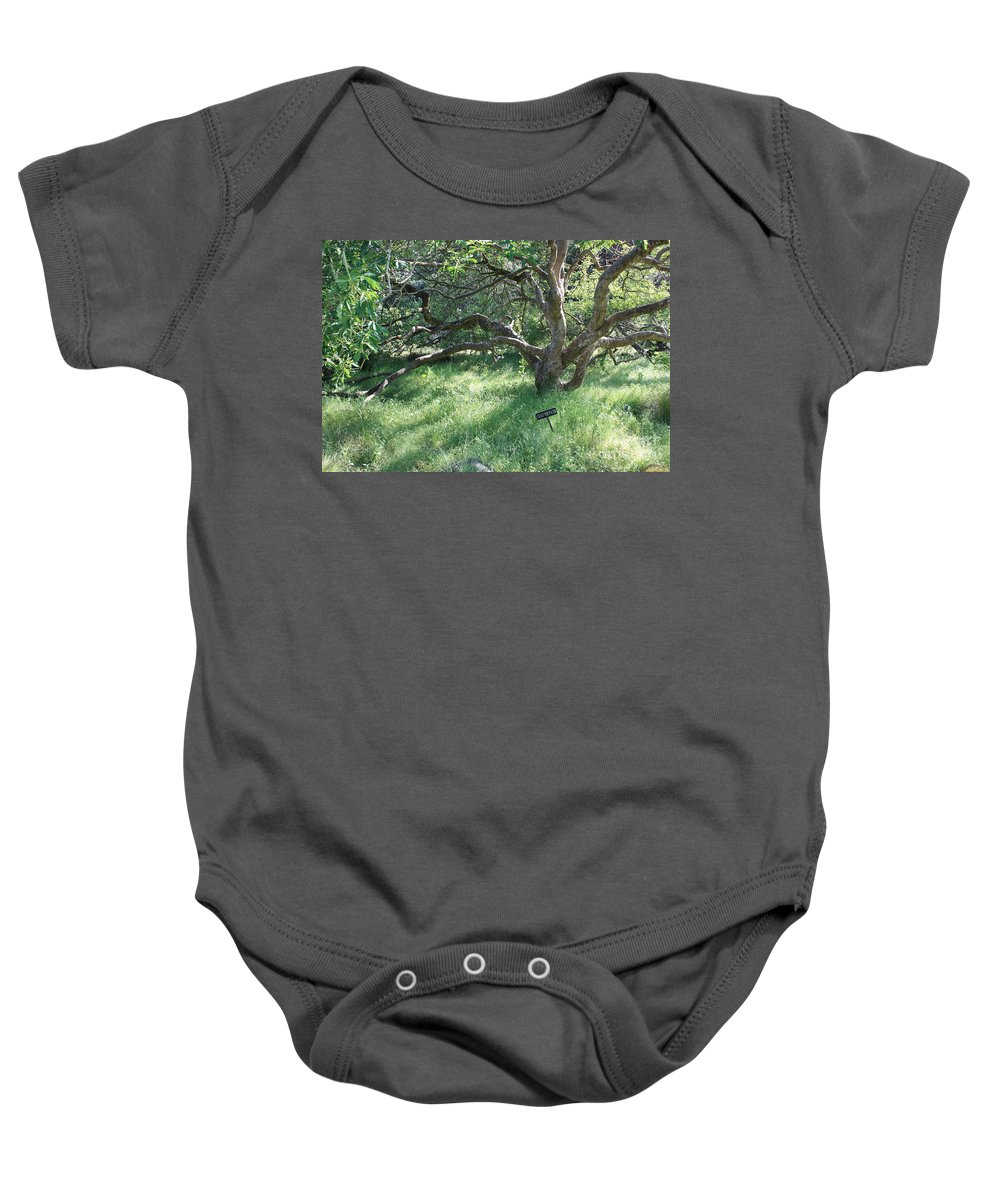 Tree Baby Onesie featuring the photograph Stay On Path by Carol Groenen