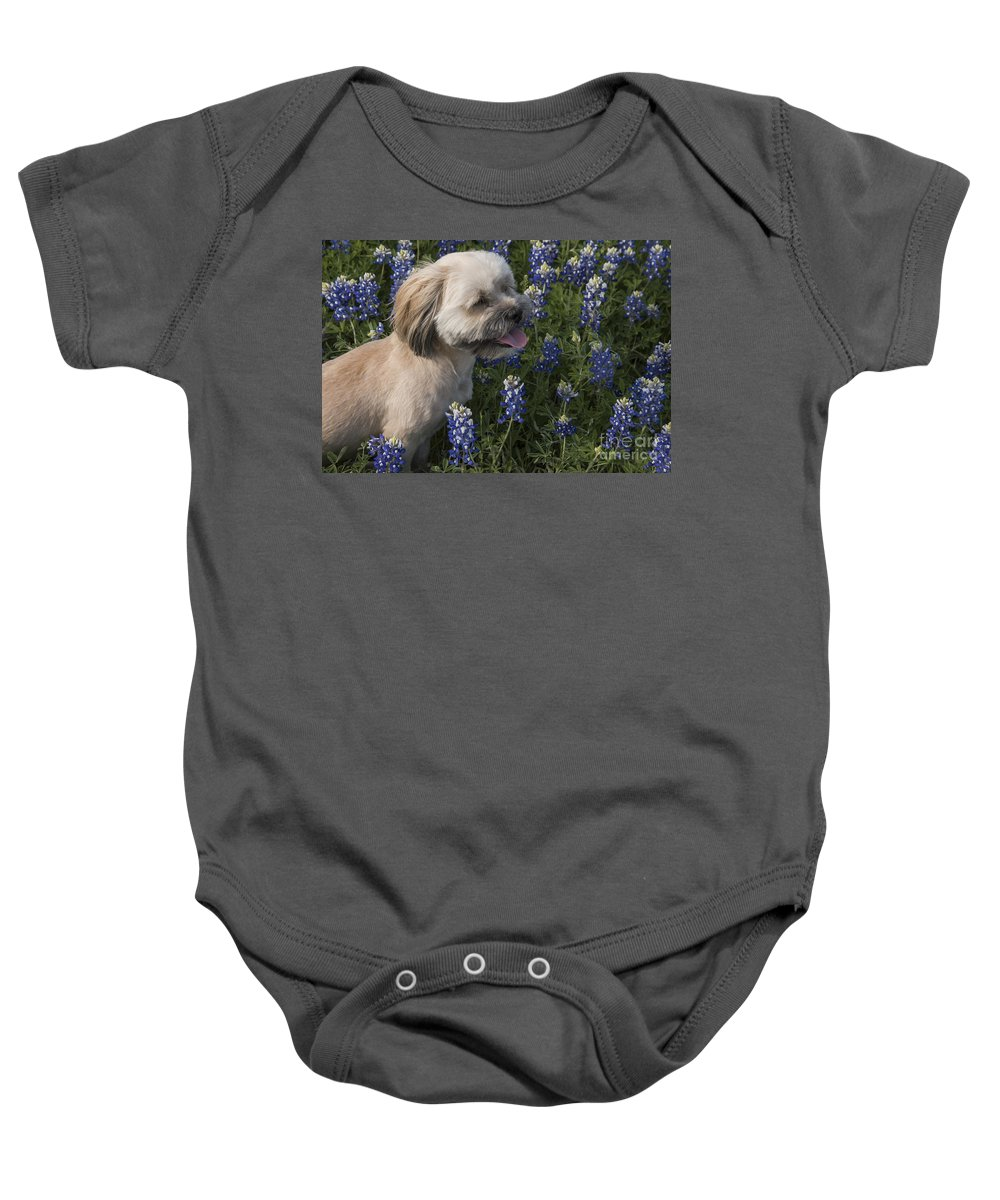 Muleshoe Bend Recreation Area Texas Bluebonnet Bluebonnets Flower Flowers Bloom Blooms Buddy Dog Dogs Animal Animals Creature Creatures Spring Baby Onesie featuring the photograph Stopped To Smell The Bonnets by Bob Phillips