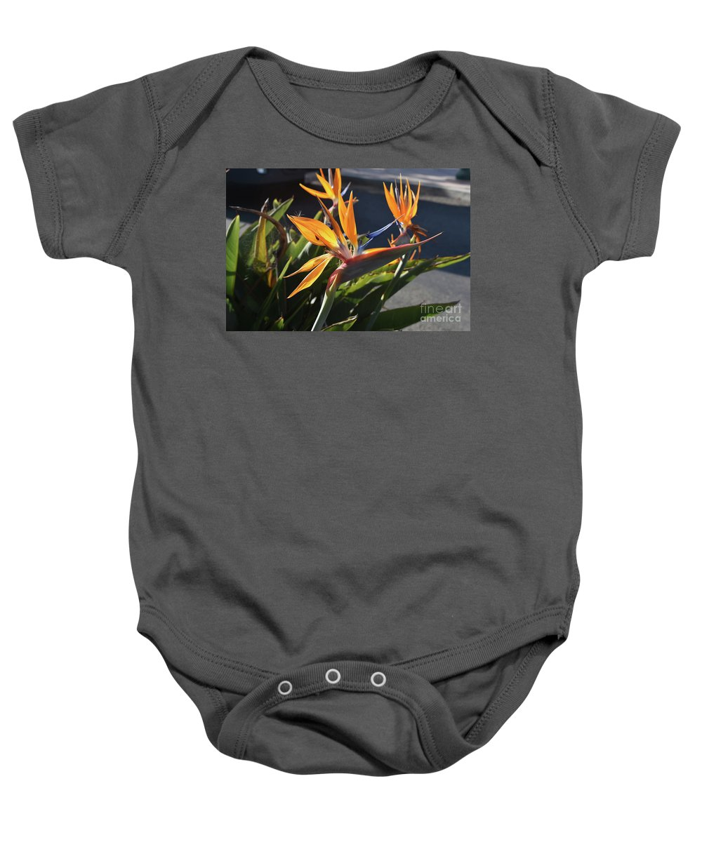 Bird-of-paradise Baby Onesie featuring the photograph Stunning Bunch Of Flowers With Bright Orange Petals by DejaVu Designs