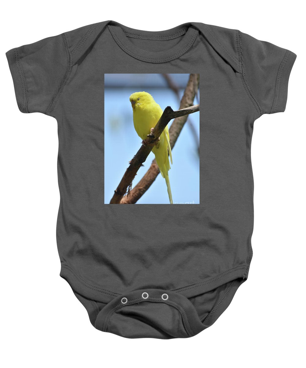 Budgie Baby Onesie featuring the photograph Stunning Little Yellow Budgie Parakeet In Nature by DejaVu Designs