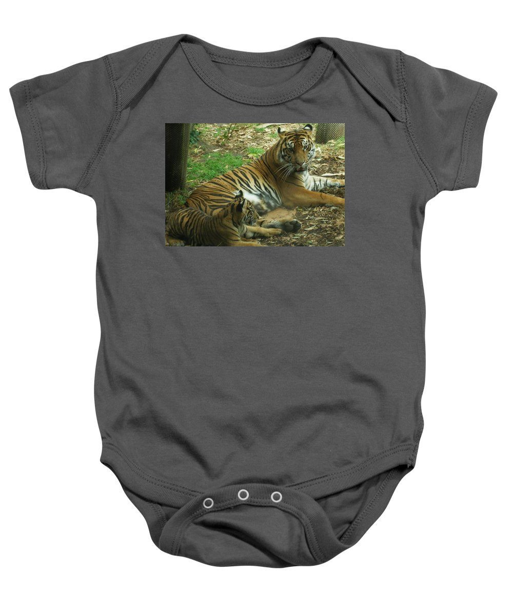Tiger Baby Onesie featuring the photograph Sumatran Tigers by Travis Day