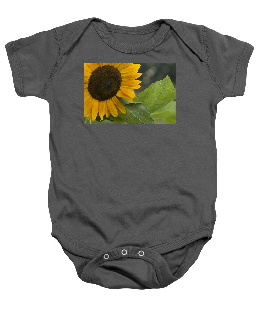 Flower Nature Farm Yellow Bright Sunflower Green Leaf Leaves Close Garden Organic Happy Baby Onesie featuring the photograph Sunflower by Andrei Shliakhau