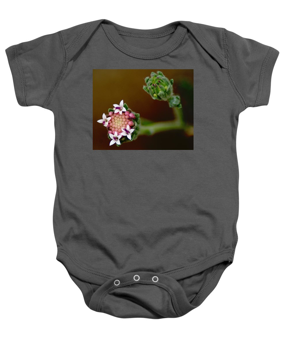 Flowers Baby Onesie featuring the photograph The Brothers by Ben Upham III