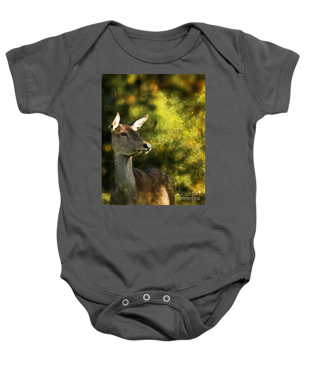 Deer Baby Onesie featuring the photograph The Deer by Angel Ciesniarska