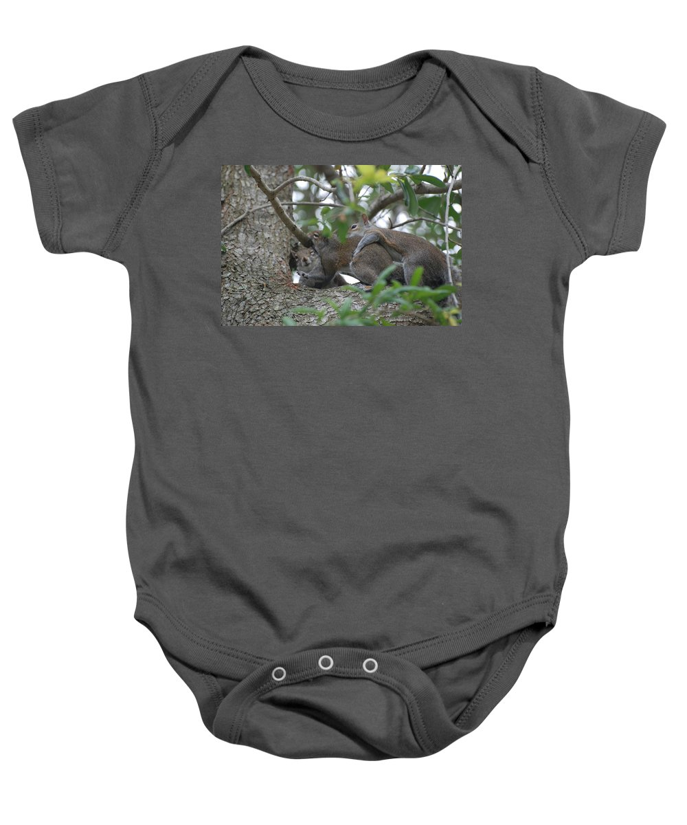 Squirrels Baby Onesie featuring the photograph The Fight For Life by Rob Hans