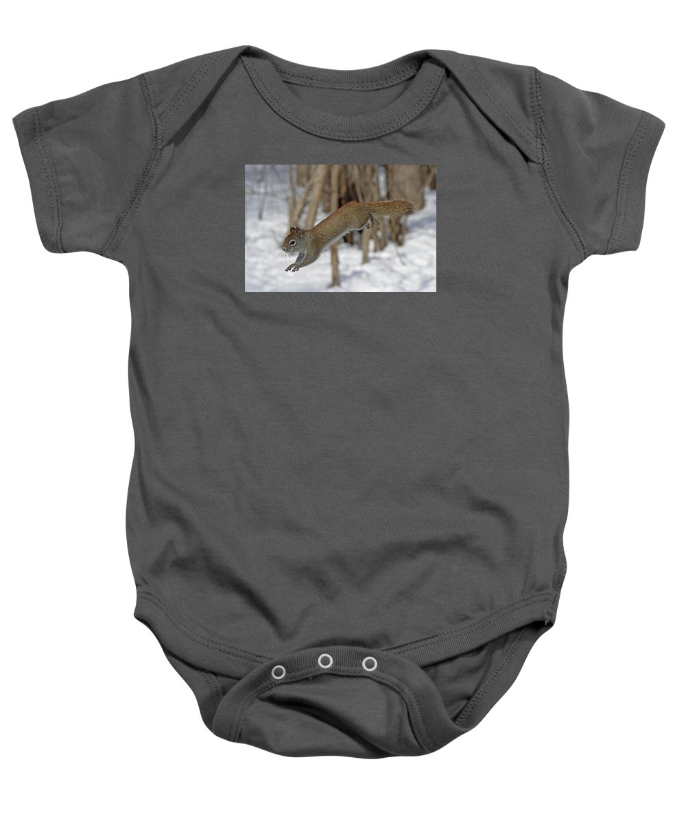 American Red Squirrel Baby Onesie featuring the photograph The Jumping American Red Squirrel by Asbed Iskedjian
