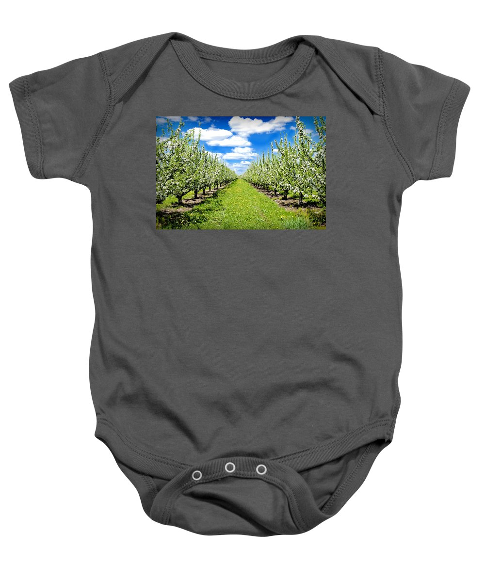 Apples Baby Onesie featuring the photograph The Orchard by Greg Fortier