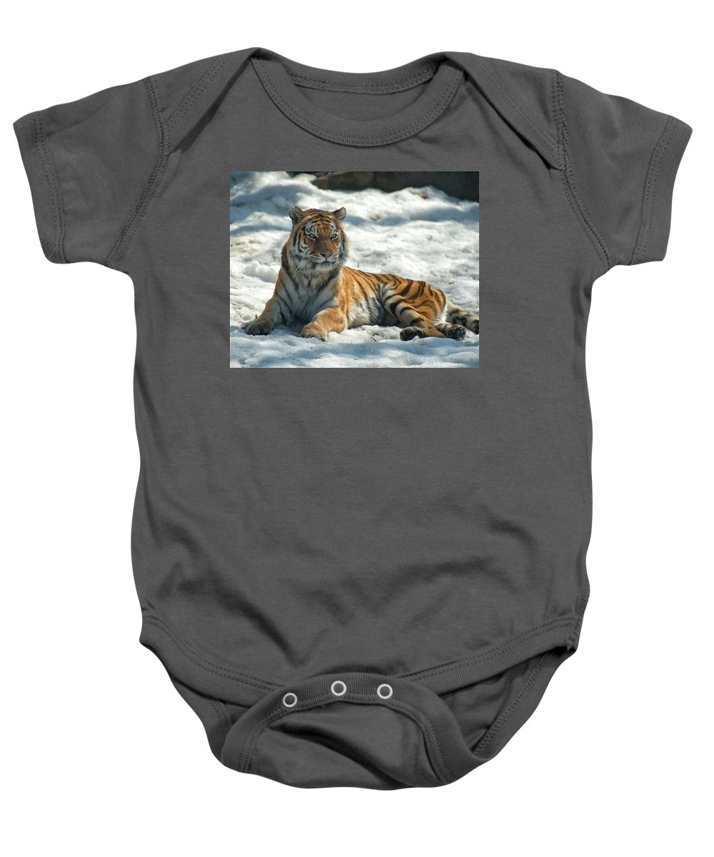 Lion Baby Onesie featuring the photograph The Snowy Lion by Karl Schroeder