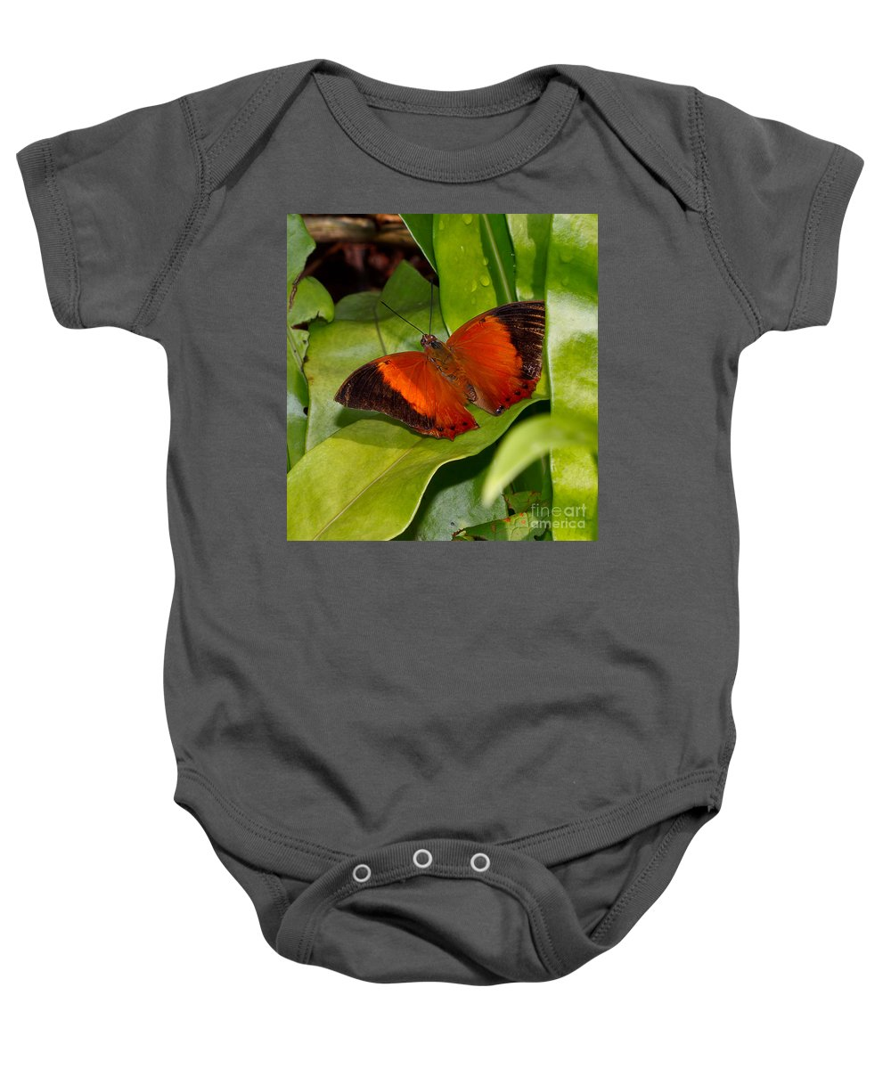 Butterfly Baby Onesie featuring the photograph The Wizard Butterfly by Louise Heusinkveld