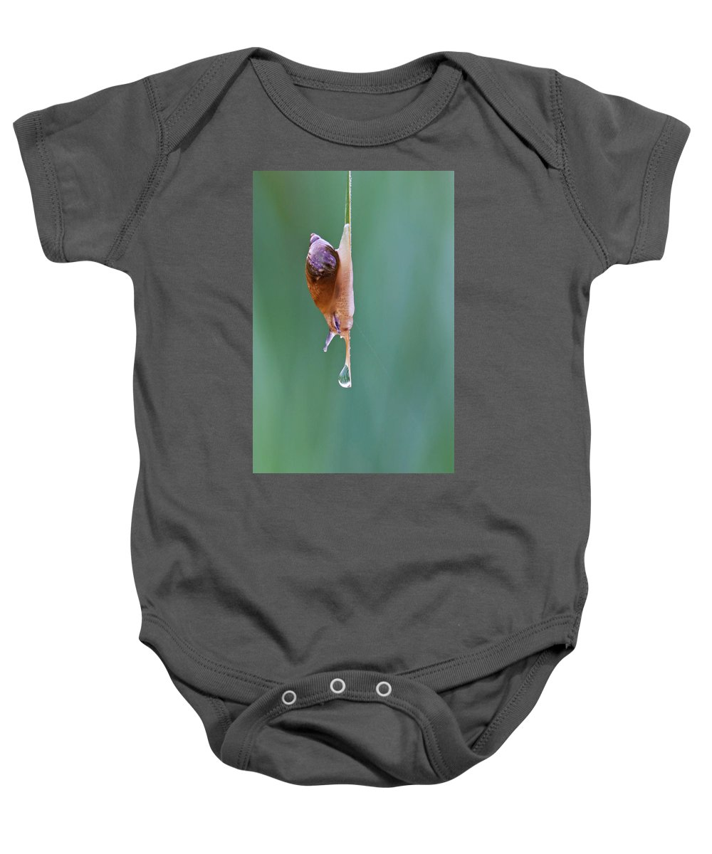 Snail Baby Onesie featuring the photograph Thirsty Snail by Mircea Costina Photography