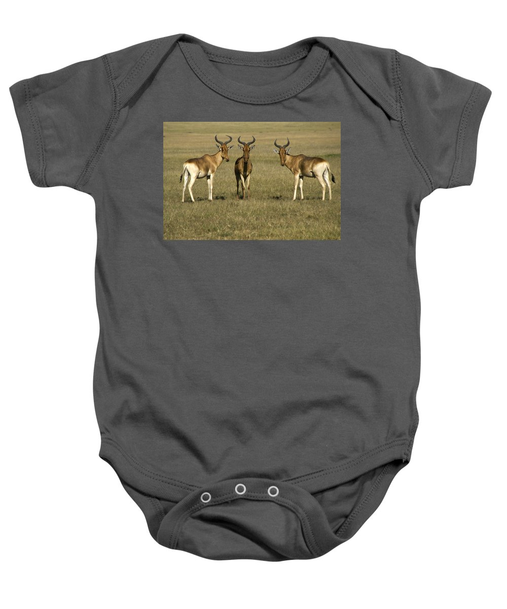 Africa Baby Onesie featuring the photograph Three Musketeers by Michele Burgess