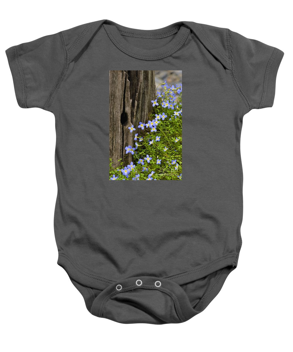 Houstonia. Serpyllifolia. Thyme-leaved Baby Onesie featuring the photograph Thyme-leaved Bluets - D008426 by Daniel Dempster