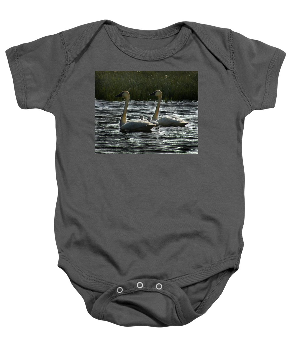 Tundra Swans Baby Onesie featuring the photograph Tundra Swans by Anthony Jones