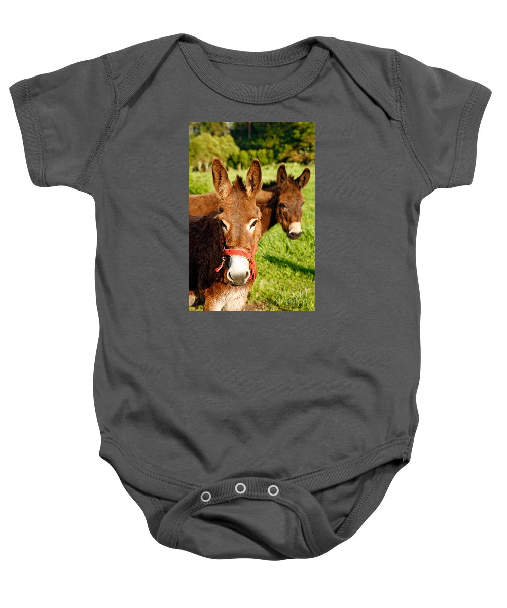 Animals Baby Onesie featuring the photograph Two Donkeys by Gaspar Avila
