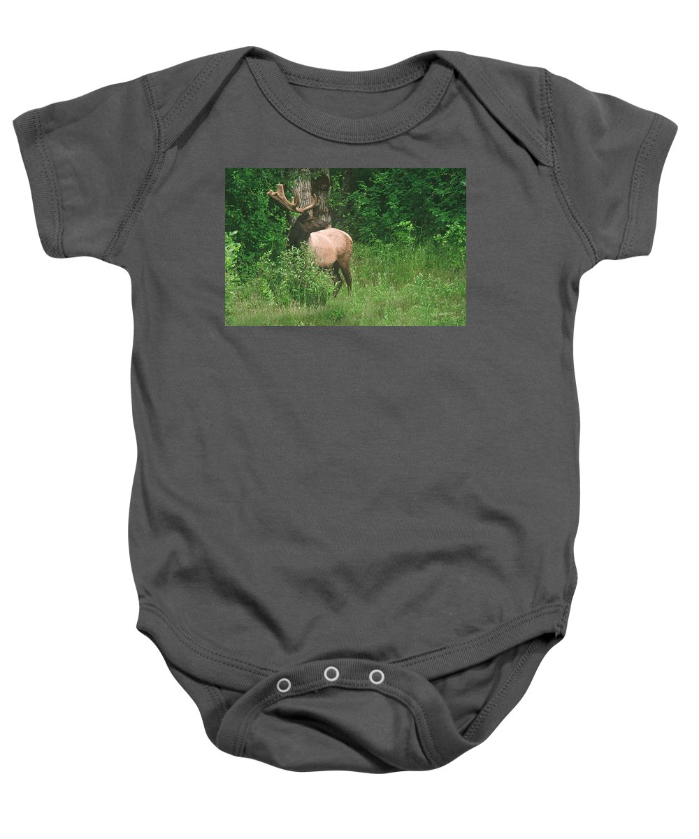 Elk Baby Onesie featuring the photograph Velvet Never Looked So Good by Mick Anderson