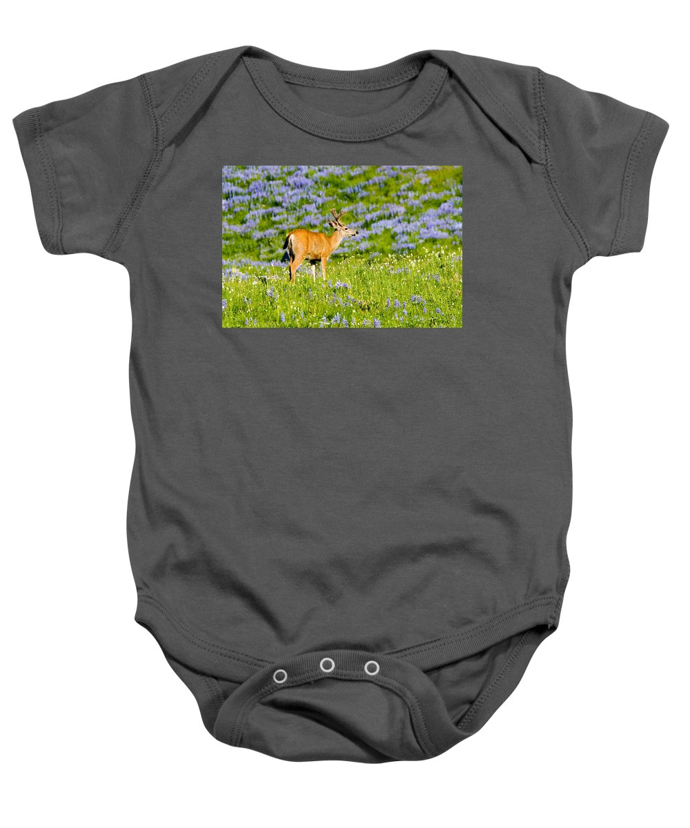 Deer Baby Onesie featuring the photograph Velvet On Lupine by Mike Dawson