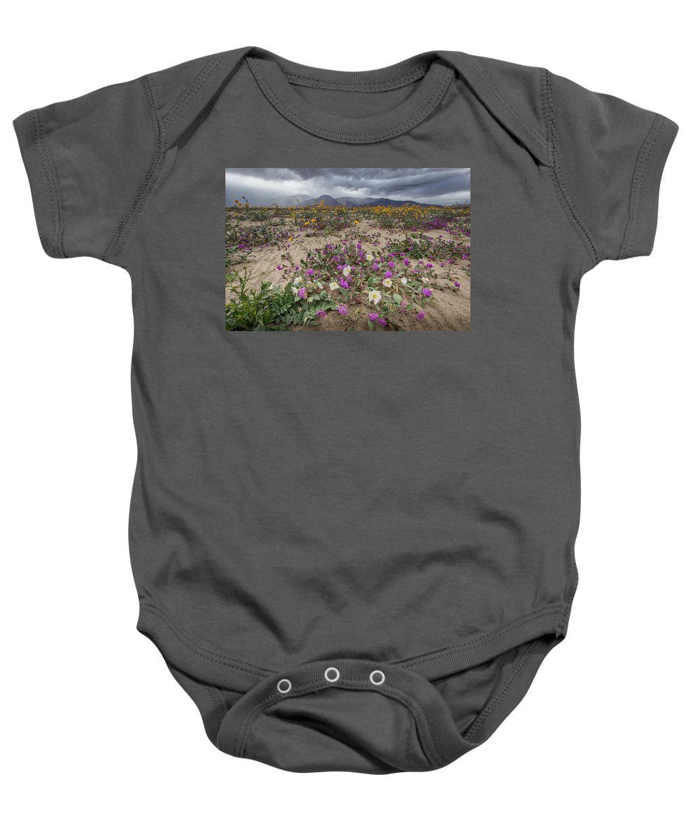 Anza-borrego Desert Baby Onesie featuring the photograph Verbena And Primrose by Peter Tellone