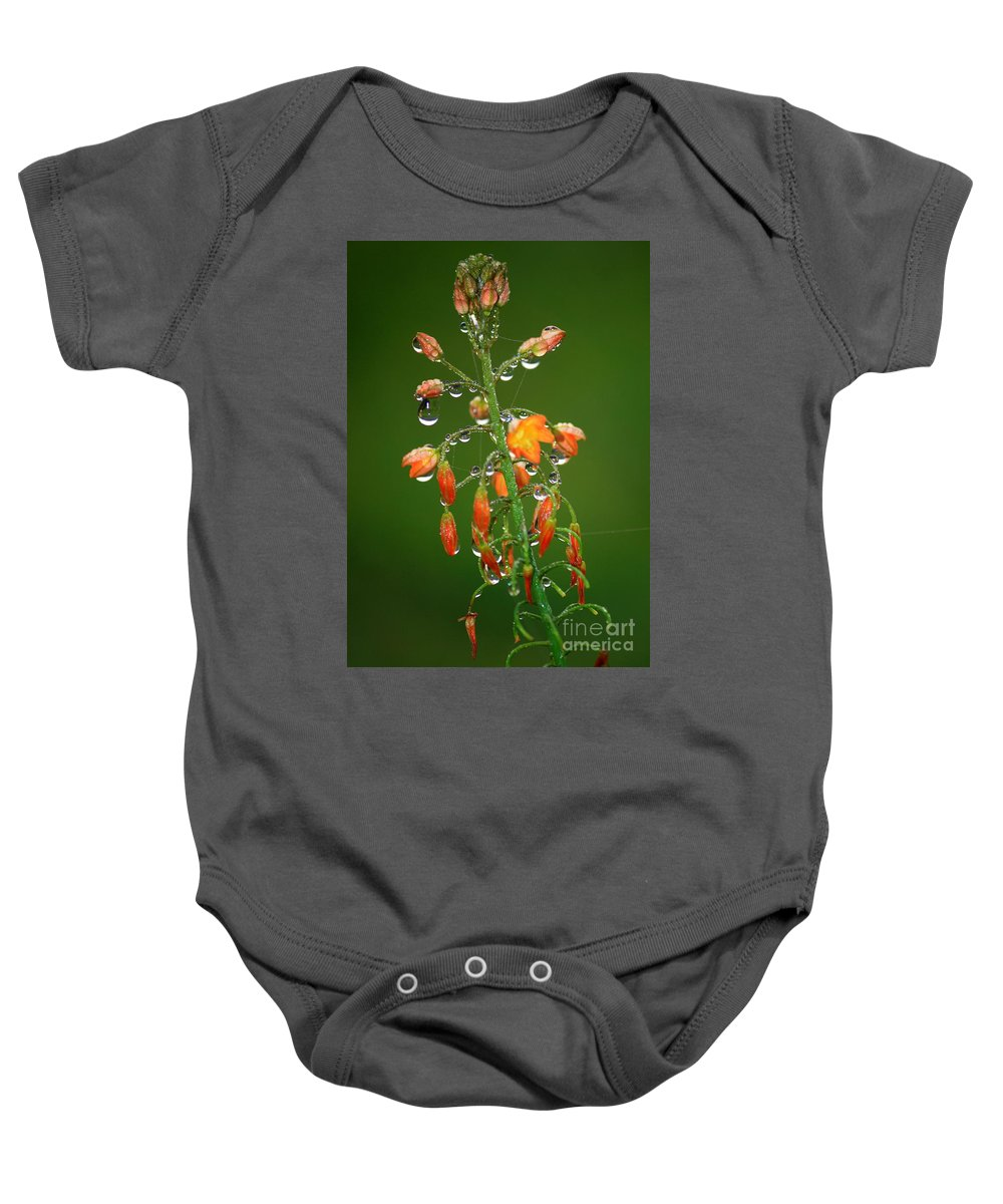 Green And Orange Baby Onesie featuring the photograph Waiting For Sunshine by Carol Groenen