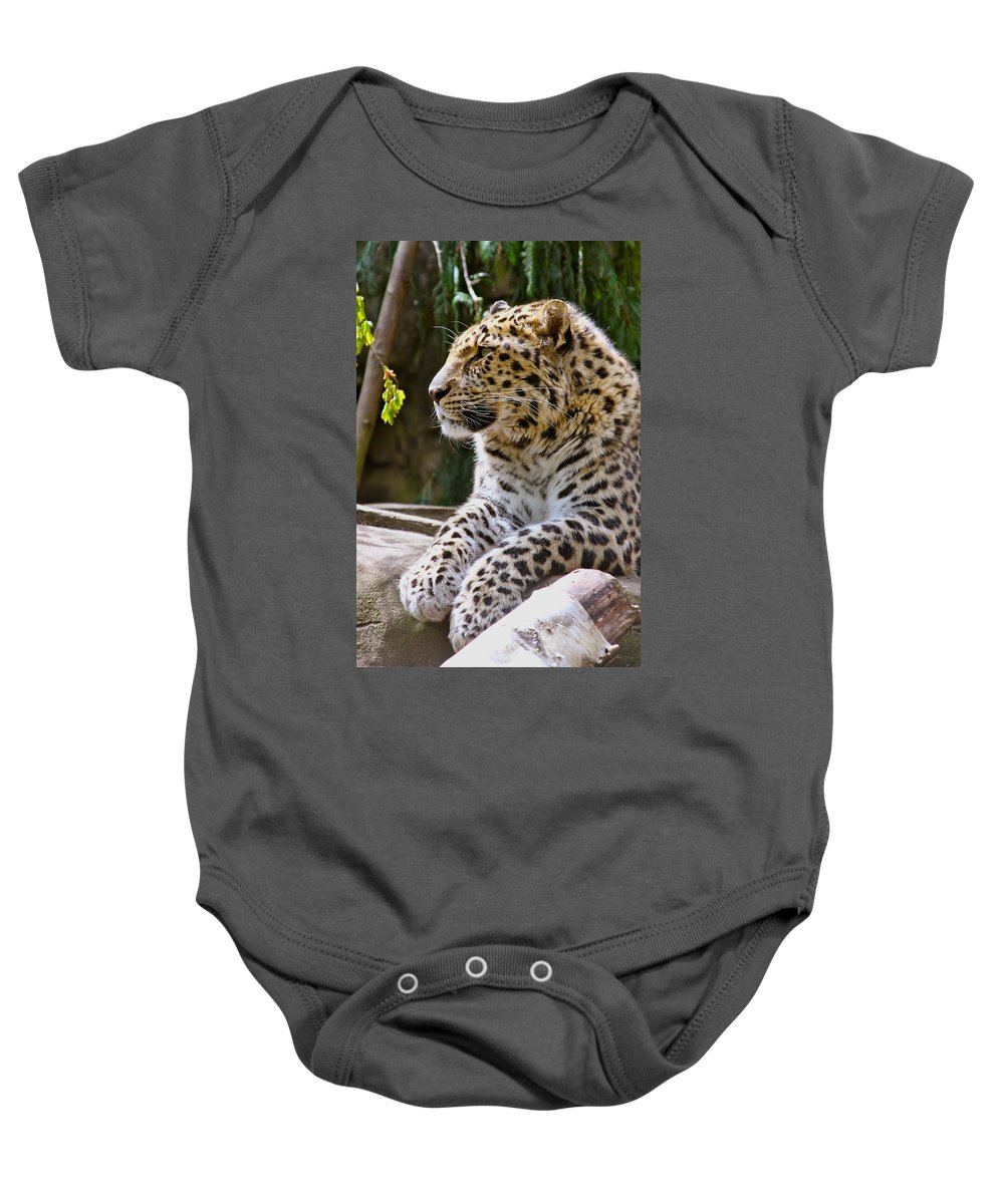 Leopard Baby Onesie featuring the photograph Watching A Shadow by Laddie Halupa