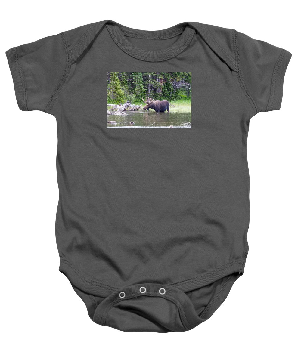 Moose Baby Onesie featuring the photograph Water Feeding Moose by James BO Insogna
