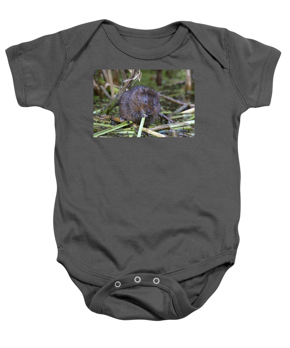 Mammals Baby Onesie featuring the photograph Water Vole A Chomp by Bob Kemp
