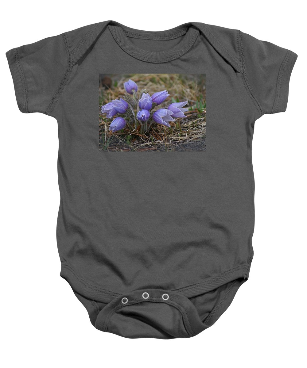 Pasque Flower Baby Onesie featuring the photograph Watercolor Pasque Flowers by Heather Coen