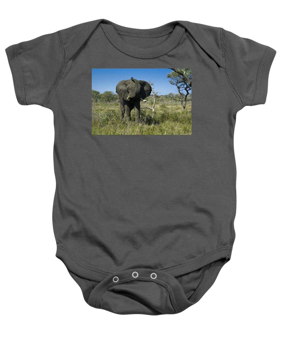 Africa Baby Onesie featuring the photograph Well Hello There by Michele Burgess