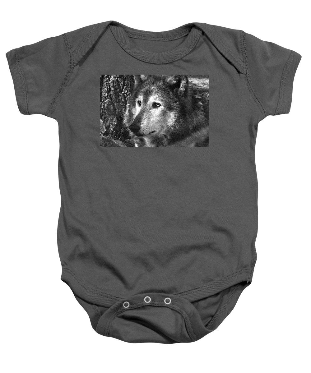Wolf Baby Onesie featuring the photograph What Is A Wolf Thinking by Karol Livote