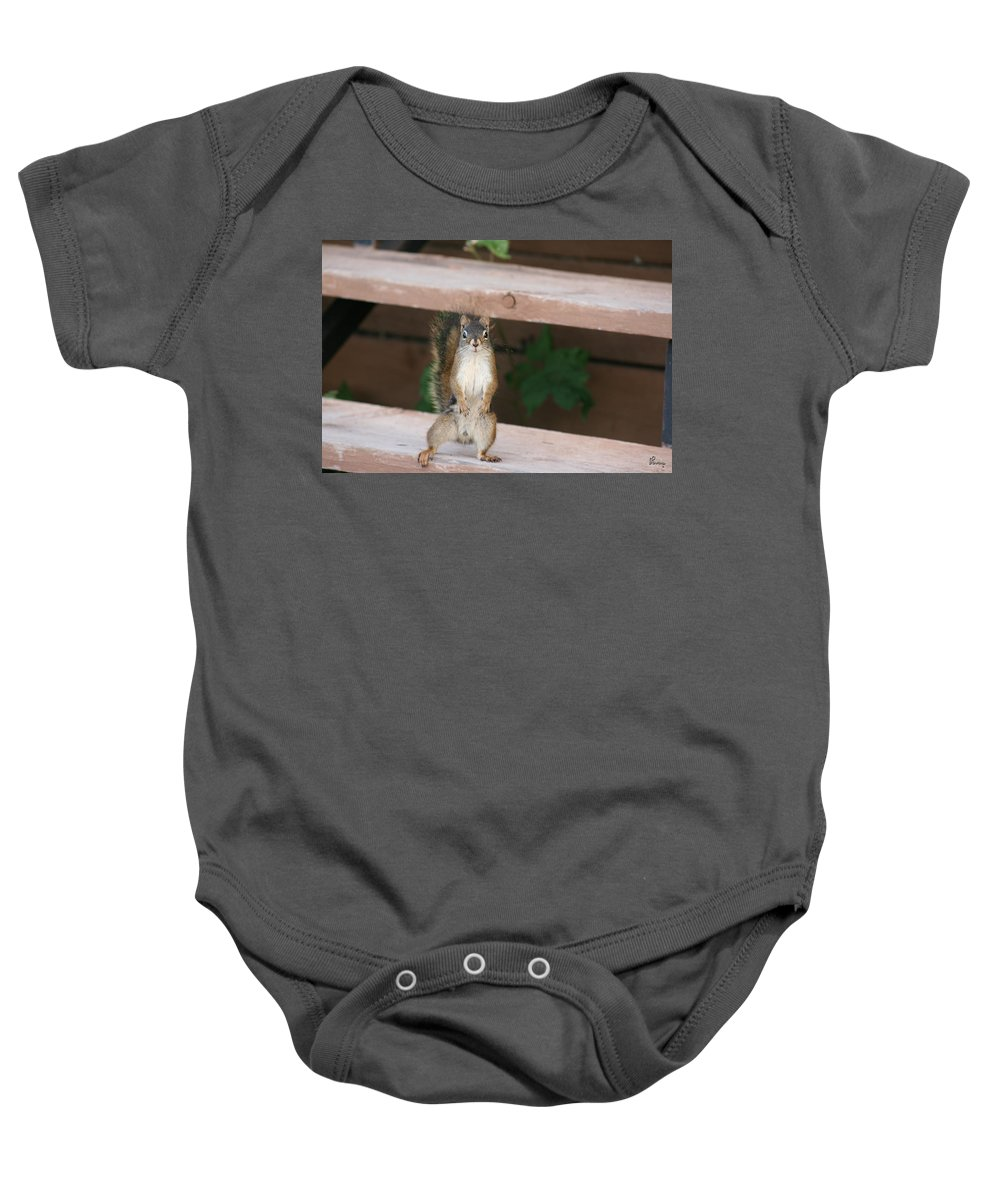Squirrel Mother Nature Wild Animal Cute Dancing Baby Onesie featuring the photograph What You Lookin At by Andrea Lawrence